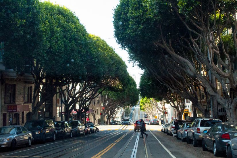 Big Trees in the Strees of San Francisco