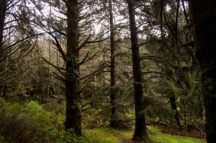 Dark Canopies of California Forests
